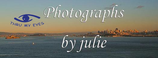 Photographs by julie