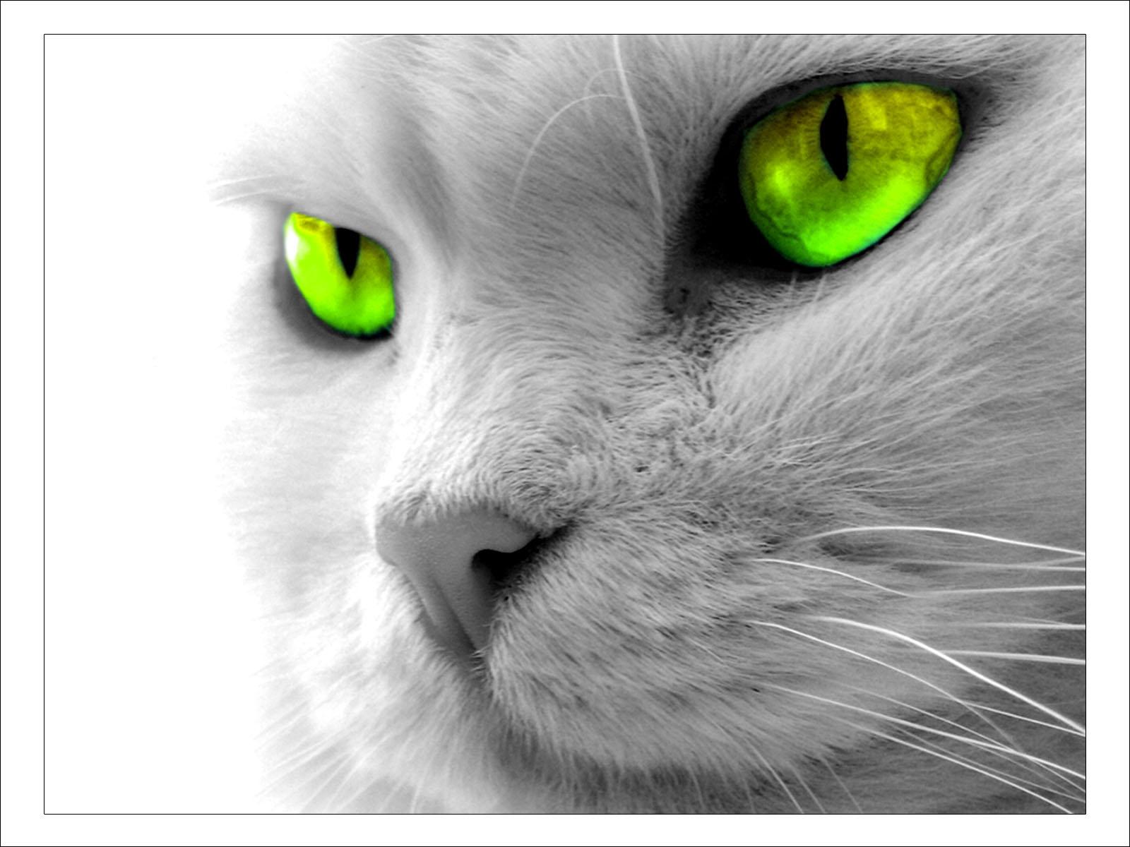 http://2.bp.blogspot.com/_md7-1kaasuY/SxQlC4AM8CI/AAAAAAAAB_g/oMohsJ6KGC8/s1600/catpaper10.jpg