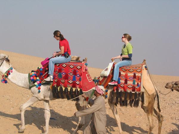 Camel Queens
