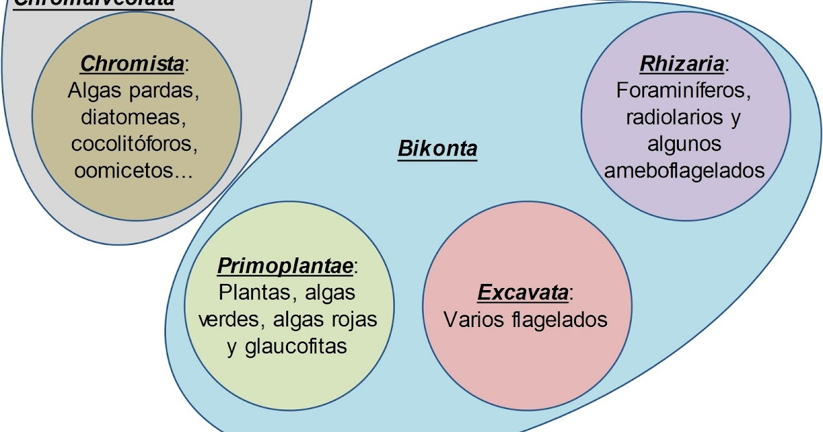 Radiolarios reproduccion asexual de las plantas