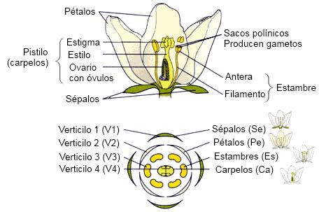 B.log.ia 2.0: La flor