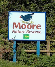 CLICK on the Moorhen go to the Moore NR page