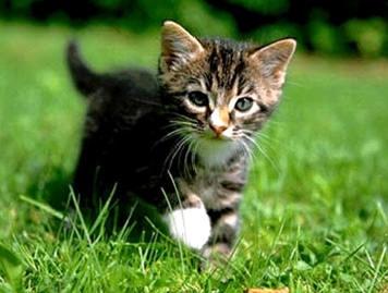 [Gatos.1]