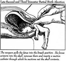 Darwinian infanticide