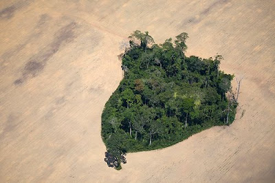 An island of rainforest has been spared in the middle of a soy field