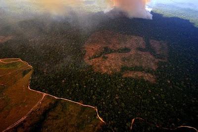 Pará deforestation