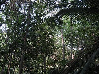 Amazonas state