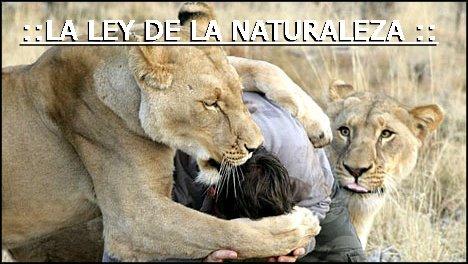 :: La Ley de la Naturaleza ::