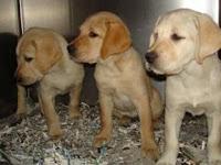 Pups inside the puppy truck
