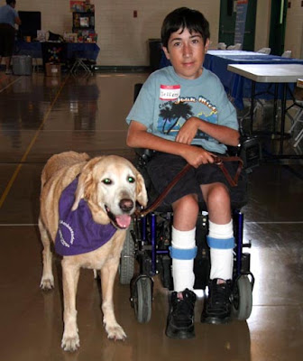 A young man in a wheelchair with a GDB ambassador dog