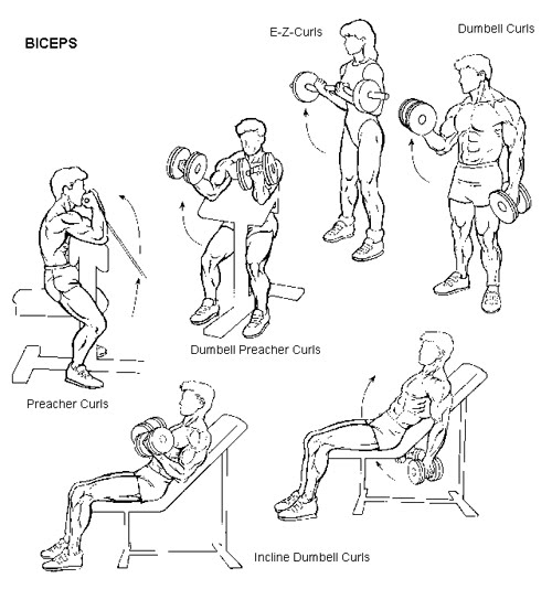 EXSERVICE29: Biceps Muscle Building Exercises