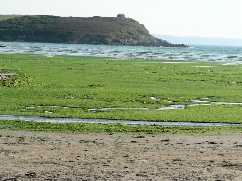marée verte en bretagne
