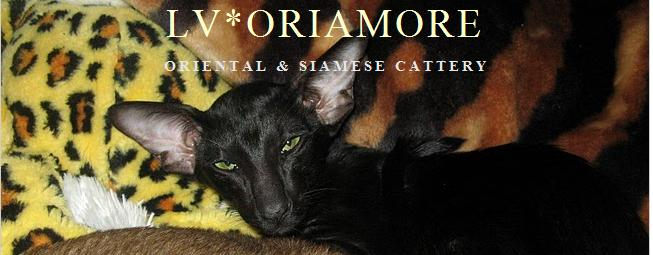 Oriental and Siamese Cats cattery LV*Oriamore