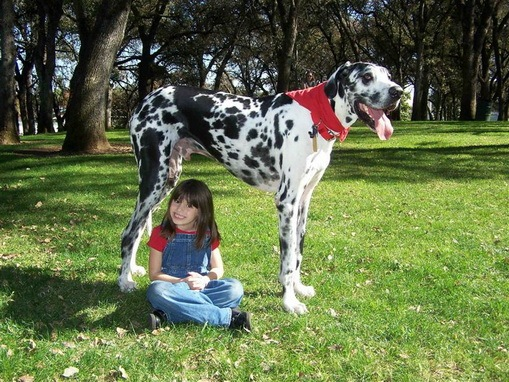largest dog in world. The World#39;s Largest Dog