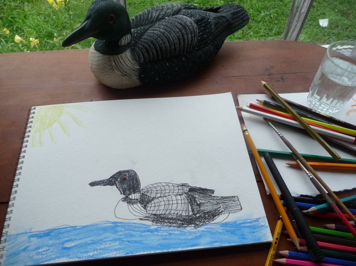 common loon drawing. common loon drawing.