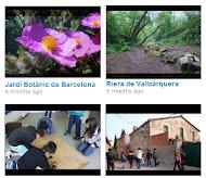 Vídeos de l'escola verda