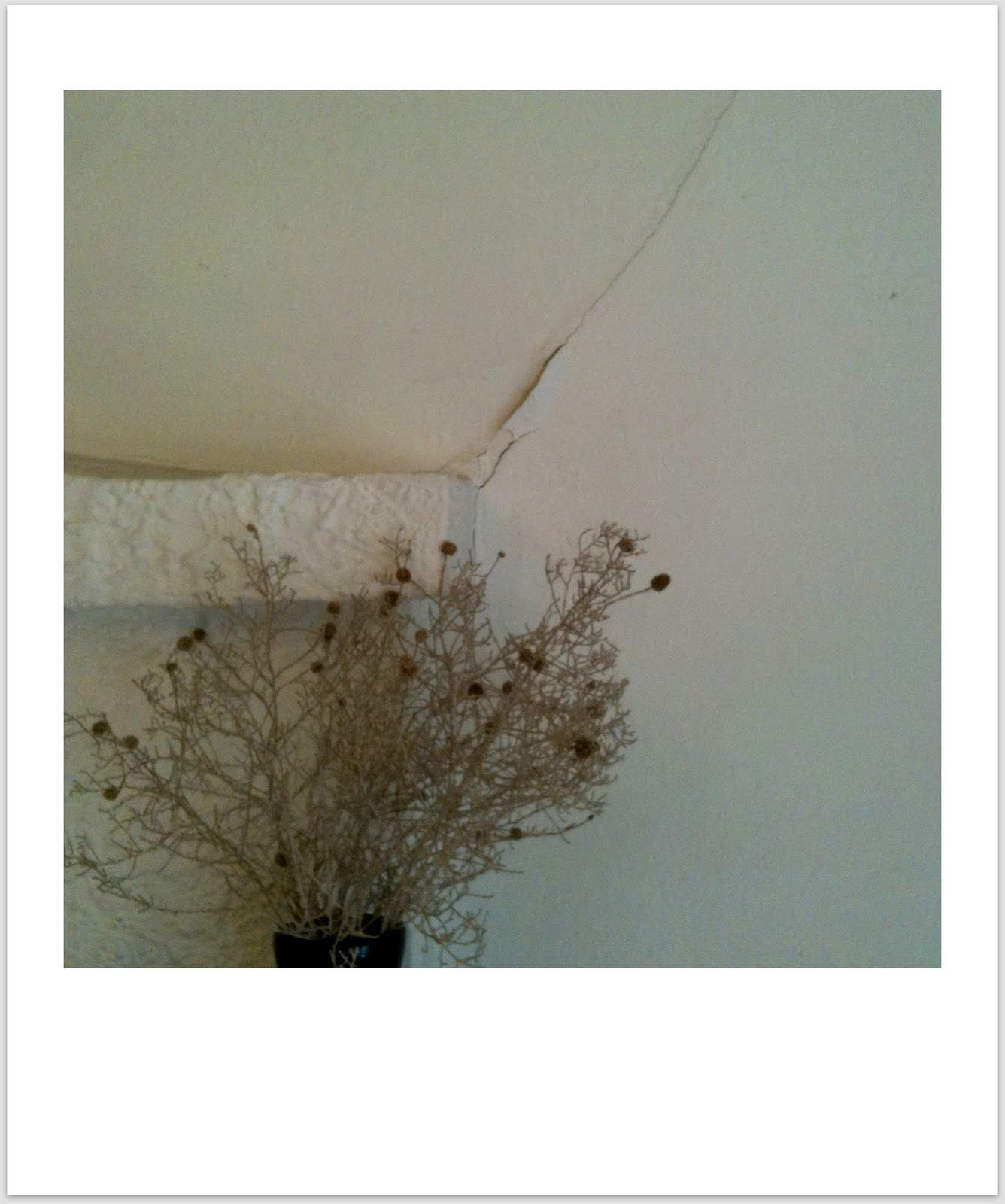 http://2.bp.blogspot.com/_mmAmDEmBgSQ/TD2SPhPkrQI/AAAAAAAAAY8/mChytGsHIJs/s1600/wallcrack.jpg