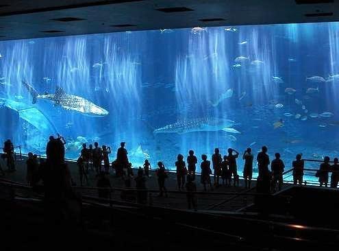 Aquarium Ikan Paus Di Jepang Okinawa_churaumi_aquarium_13