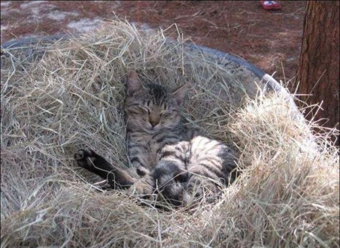 http://2.bp.blogspot.com/_mmBw3uzPnJI/S-RJ-ZfG0-I/AAAAAAABOyo/nSgYcOFF2s0/s1600/homeless_cats_37.jpg