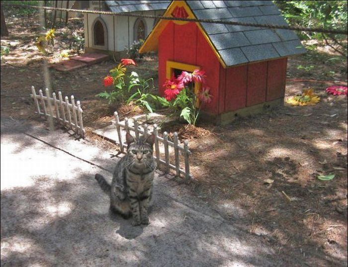 http://2.bp.blogspot.com/_mmBw3uzPnJI/S-RKI9KQIFI/AAAAAAABOzA/KrmlkY5isfU/s1600/homeless_cats_34.jpg