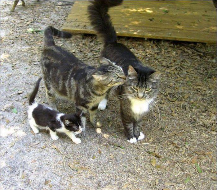 http://2.bp.blogspot.com/_mmBw3uzPnJI/S-RKJQN2u5I/AAAAAAABOzQ/PSY5zaEoaHI/s1600/homeless_cats_32.jpg