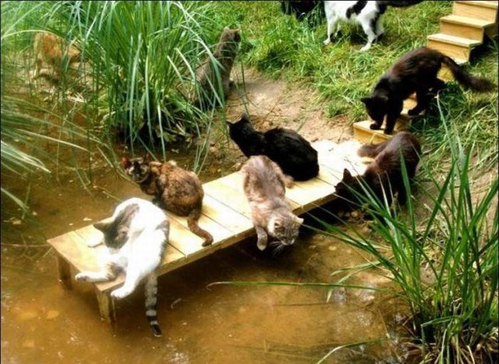 http://2.bp.blogspot.com/_mmBw3uzPnJI/S-RKw9NIlkI/AAAAAAABOz4/Go57iphtFj8/s1600/homeless_cats_27.jpg