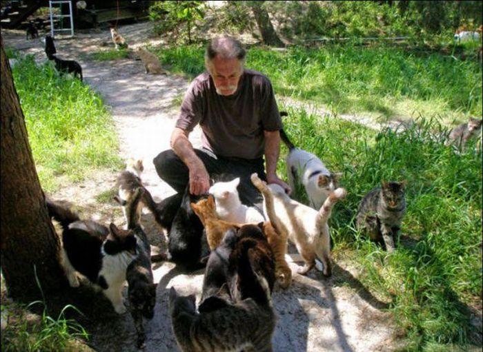 http://2.bp.blogspot.com/_mmBw3uzPnJI/S-RLF2vUqsI/AAAAAAABO04/kL1pvjvgO0c/s1600/homeless_cats_19.jpg