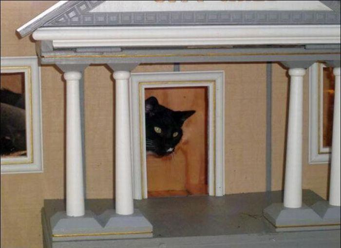 http://2.bp.blogspot.com/_mmBw3uzPnJI/S-RLNzakYDI/AAAAAAABO1Q/m2I0h8RmFvE/s1600/homeless_cats_16.jpg
