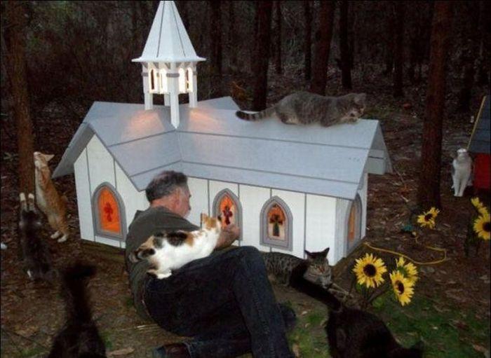 http://2.bp.blogspot.com/_mmBw3uzPnJI/S-RLWhuVcFI/AAAAAAABO1w/ypPJwfjaEiM/s1600/homeless_cats_12.jpg