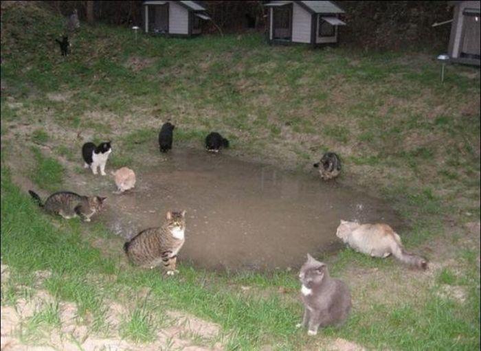 http://2.bp.blogspot.com/_mmBw3uzPnJI/S-RLp7WwnlI/AAAAAAABO24/AgePTBD1upE/s1600/homeless_cats_03.jpg