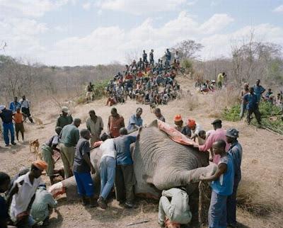 gajah zimbabwe