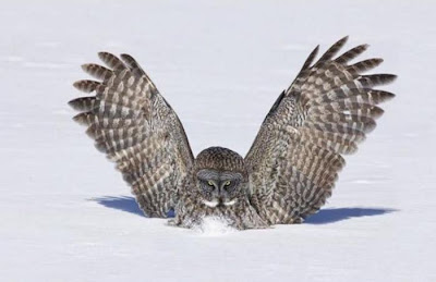 Funny pic of owl