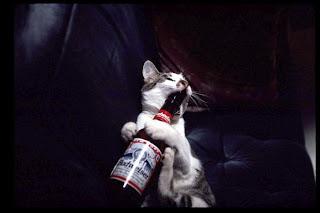 25 gatos que gostam de cerveja