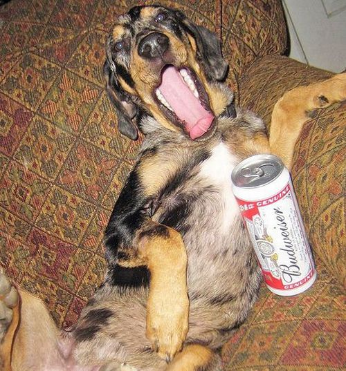 Dogs with Beer ~ Damn Cool Pictures