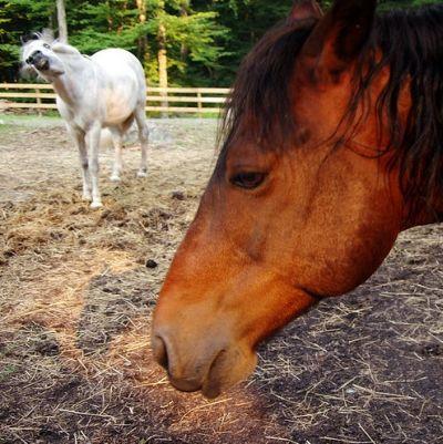 http://2.bp.blogspot.com/_mmBw3uzPnJI/S7DON-YQnVI/AAAAAAABH5M/JTGH8ukO-Pc/s1600/horse_photobombs_22.jpg