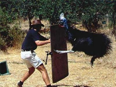動物的反擊