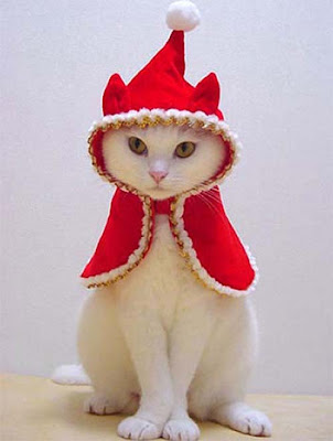 Funny Animals Santa Hat Pics