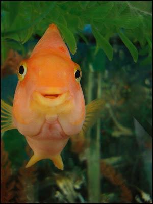 اسماك غريبة الشكل