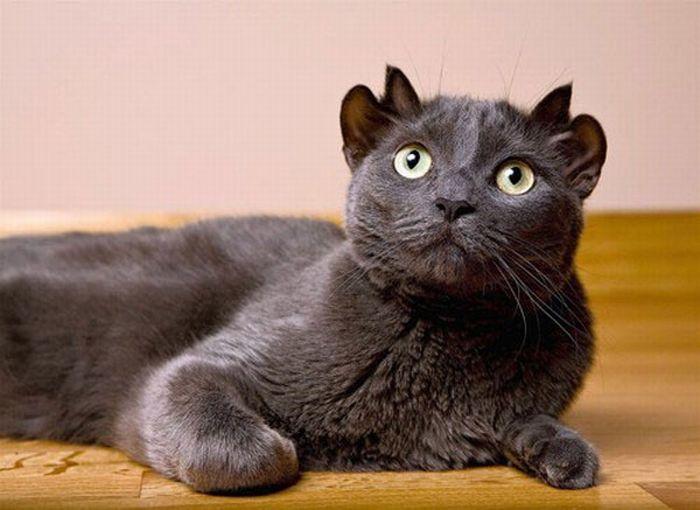 egyptian blue cat