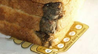 Dead Mouse Found In Loaf  Of Bread Seen On www.coolpicturegallery.net