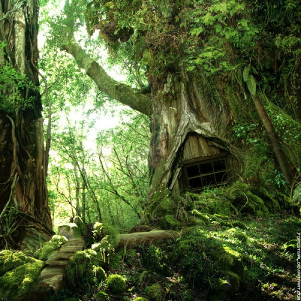 hobbit fantasy forest trees - photo #1