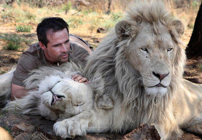singa, hewan carnivora, macan, binatang buas, persahabatan manusia dengan binatang,