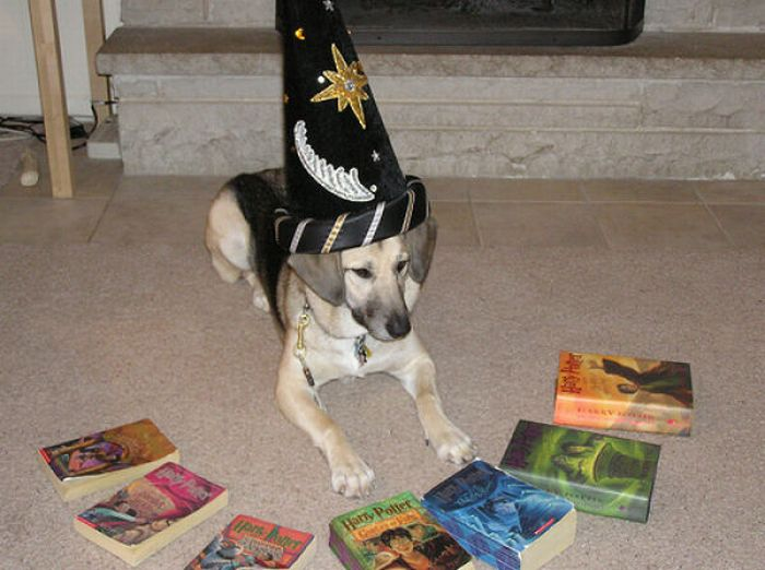 Harry Potter Pets Damn Cool Pictures