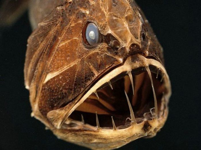 http://2.bp.blogspot.com/_mmBw3uzPnJI/TRBkSezWh3I/AAAAAAAB1ao/g_xyGVeAHqE/s1600/ugliest_and_scariest_fishes_13.jpg