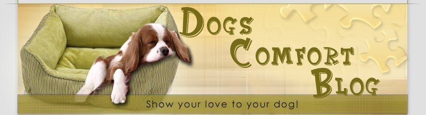 Dogs Comfort Blog - All About Dog Carriers