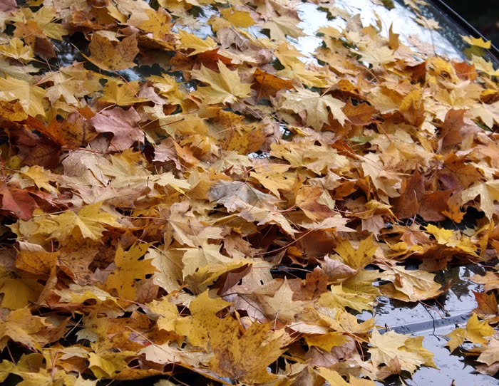 [leaves_2.jpg]
