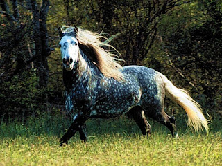 Horse spotted wallpaper