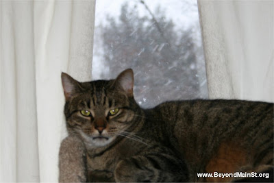 cat in snowstorm