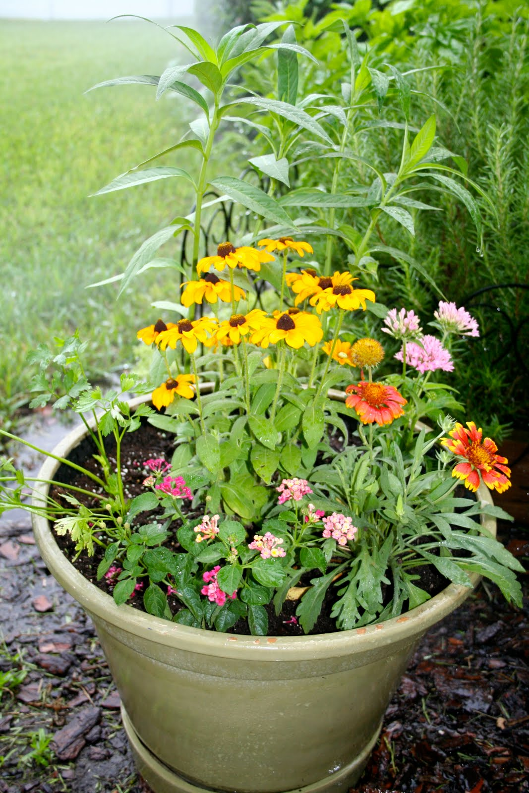 Milkweed Gardens Florida Friendly Butterfly Container Gardening Follow Up