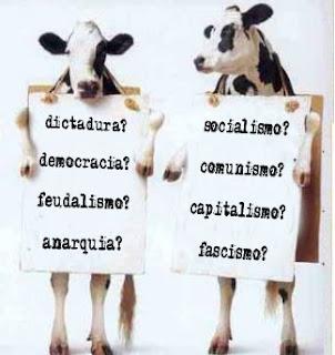 Tienes 2 vacas ...